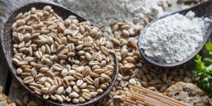 espelta y trigo